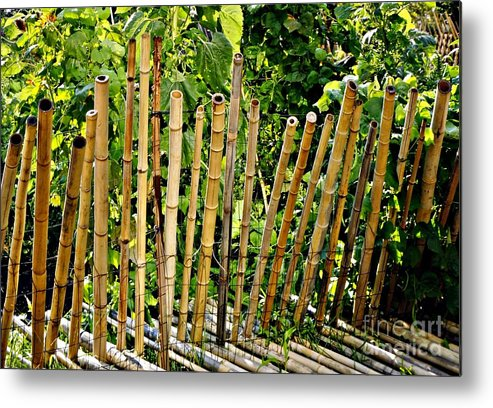 Bamboo Metal Print featuring the photograph Bamboo Fencing by Lilliana Mendez