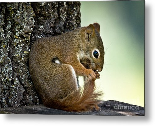 Squirrel Metal Print featuring the photograph Bath Time by Cheryl Baxter