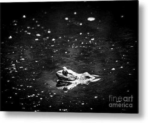 Frog Metal Print featuring the photograph Being Green In Black And White by Cheryl Baxter