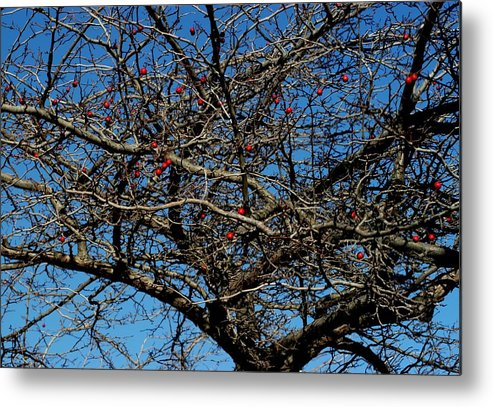 Blue Sky Metal Print featuring the photograph Bird Feed by Joseph Yarbrough