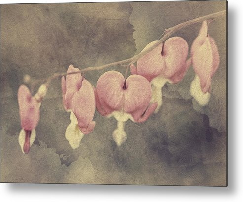 Botanical Metal Print featuring the photograph Bleeding Hearts by Maria Angelica Maira