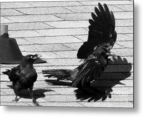 Bird Metal Print featuring the photograph Blind Crow by Lauren Blazer