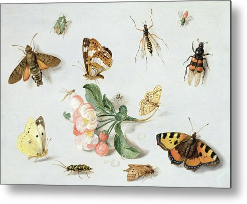 Butterfly Metal Print featuring the painting Butterflies Moths And Other Insects With A Sprig Of Apple Blossom by Jan Van Kessel