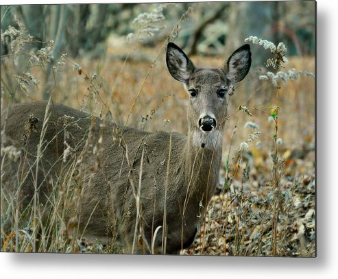 Animal Metal Print featuring the photograph Gem In The Brush by Diana Angstadt