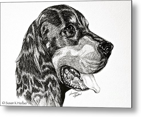 Dog Metal Print featuring the drawing Gordon Setter by Susan Herber