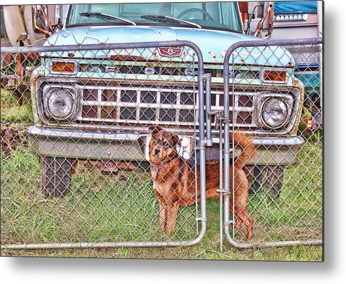 Dog Metal Print featuring the photograph Guarding The Ford by Cathy Anderson