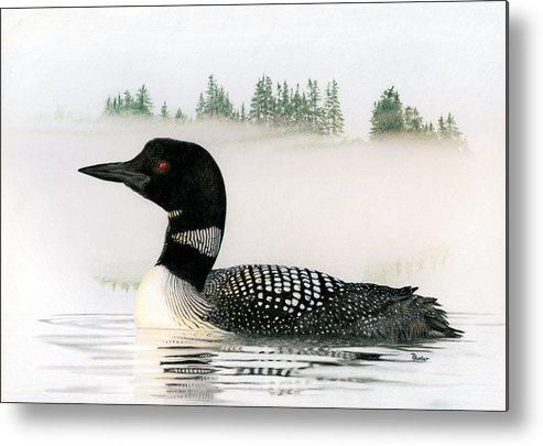 Loon Metal Print featuring the drawing Loon In Fog by Brent Ander