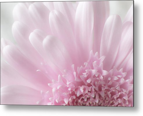 Floral Metal Print featuring the photograph Pastel Daisy by Dale Kincaid