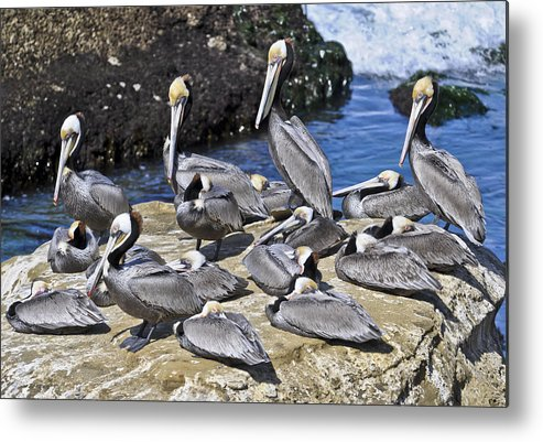 Pelican Metal Print featuring the photograph Pelican Rock by David Berg