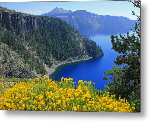 Rabbit Brush Metal Print featuring the photograph D2m5622-rabbit Brush At Crater Lake by Ed Cooper Photography
