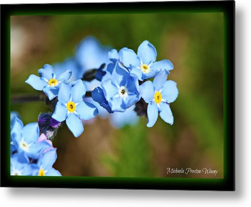 Flowers Metal Print featuring the photograph Soft Blue by Michaela Preston