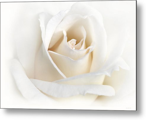 Rose Metal Print featuring the photograph Soft Ivory Rose Flower by Jennie Marie Schell