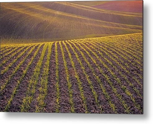 Palouse Metal Print featuring the photograph Spring Rows by Doug Davidson