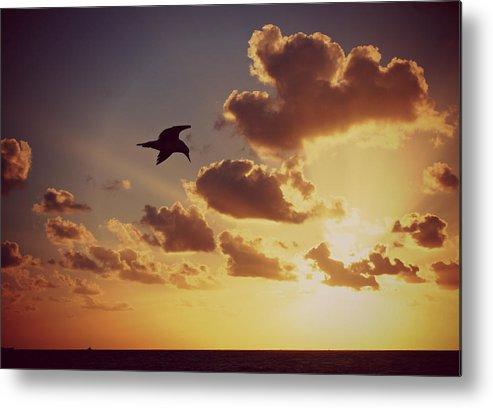 Sunrise Metal Print featuring the photograph Sunrise Seagull by Jim Rabenstine