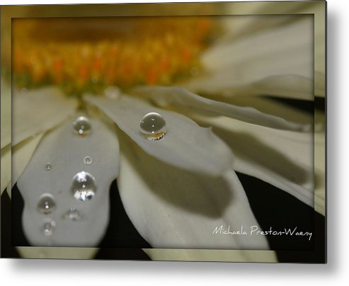 Water Metal Print featuring the photograph Sunshine by Michaela Preston