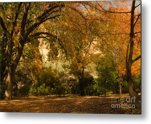Chinese Pistachios Metal Print featuring the photograph Warmth Of Autumn by Tamara Becker