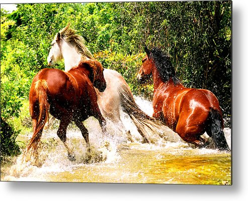 Horses Metal Print featuring the photograph Wet And Wild by Debra Raskin