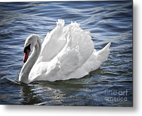 Swan Metal Print featuring the photograph White Swan On Water by Elena Elisseeva