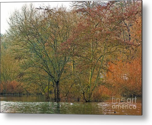Winter Metal Print featuring the photograph Winter Lake by Peter Nix