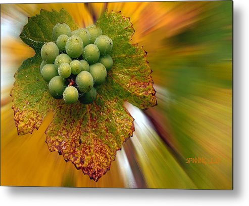 Vineyard Metal Print featuring the photograph Grapes by Jean Noren