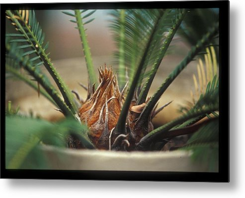 Cycad Metal Print featuring the photograph Cycad by Miguel Capelo