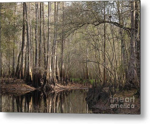 Cypress Metal Print featuring the photograph Cypress And Water by Nancy Greenland