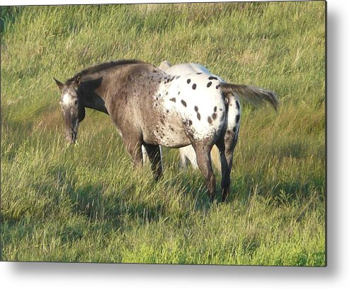 Horse Metal Print featuring the photograph Enjoying The Day by Bobbylee Farrier