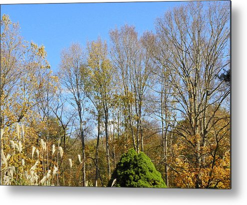 Fall Metal Print featuring the photograph fall scapes in CT by Kim Galluzzo Wozniak