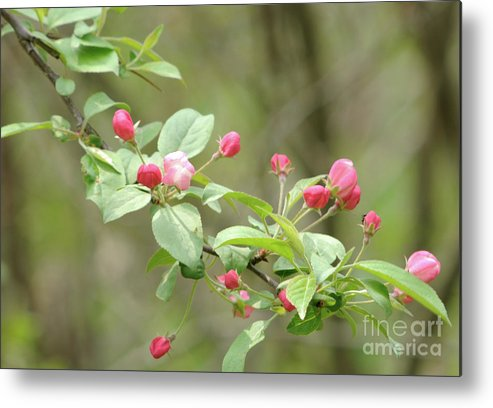 Green Metal Print featuring the photograph Flowering Tree by Ronald Grogan