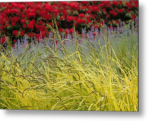 Bellevue Botanical Garden Metal Print featuring the photograph Layered by Lynn Wohlers