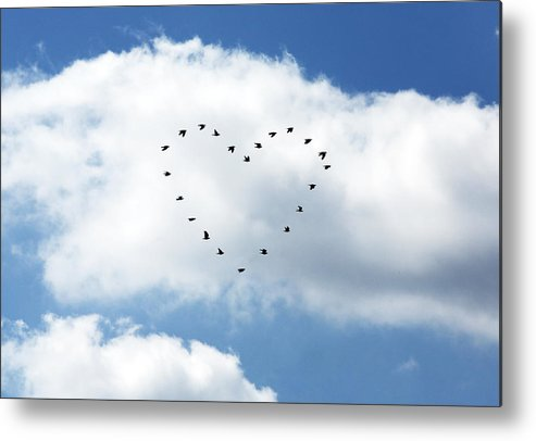 Horizontal Metal Print featuring the photograph Love Birds by Richard Newstead