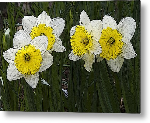 Nature Metal Print featuring the photograph Narcissus by Michael Friedman