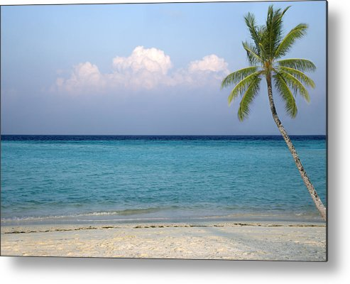 Horizontal Metal Print featuring the photograph Peaceful Tropical Beach With One Palm Tree by Rosemary Calvert