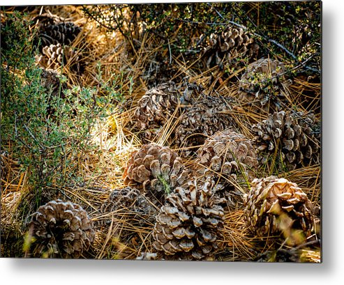 Pine Cones Metal Print featuring the photograph Pine Cones by Cathy Smith