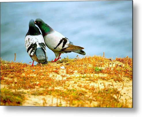 Metal Print featuring the photograph Stealing Kisses by Krista Leitzke