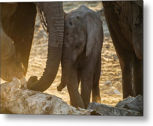 Action Metal Print featuring the photograph Tiny Trunk by Alistair Lyne
