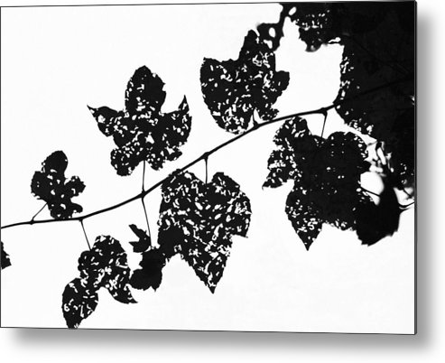 Leaf Metal Print featuring the photograph 080506-22 by Mike Davis