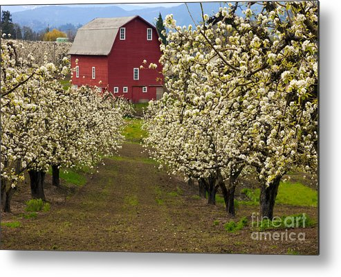 Red Barn Metal Print featuring the photograph Red Barn Spring by Mike Dawson