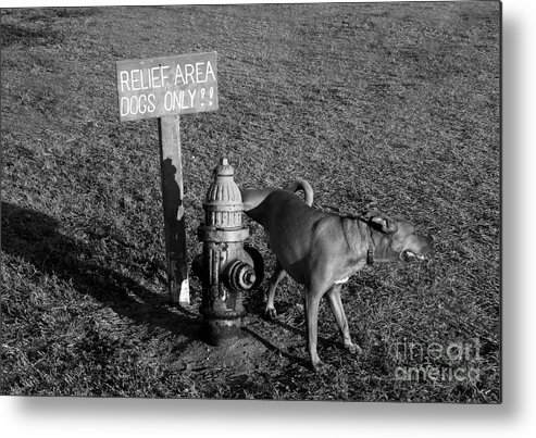 Dog Metal Print featuring the photograph A Dog's Life by David Lee Thompson