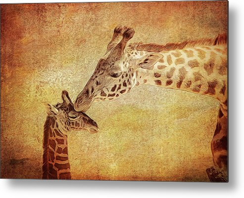 Giraffe Metal Print featuring the photograph A Mother's Kiss Painted 2 by Judy Vincent