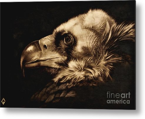Avvoltoio Metal Print featuring the pyrography Avvoltoio by Ilaria Andreucci