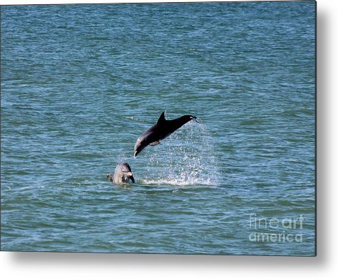 Dolphin Metal Print featuring the photograph Bottlenose Dolphins In The Ocean by Mesa Teresita