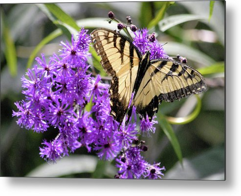 Butterfly Metal Print featuring the digital art Butterfly In Summer by George Ferrell