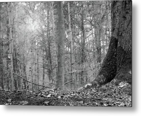 Metal Print featuring the pyrography Forest by Irina Martjanova