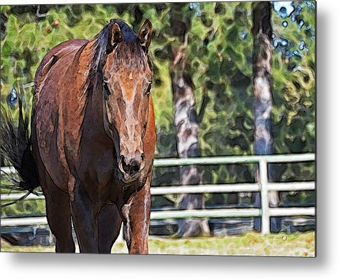 Horse Metal Print featuring the photograph Forrest by Susie Fisher