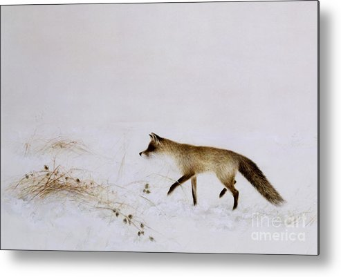 White; Alone; Renard; Neige; Snow; Fox; Animal; Winter; Landscape Metal Print featuring the painting Fox In Snow by Jane Neville