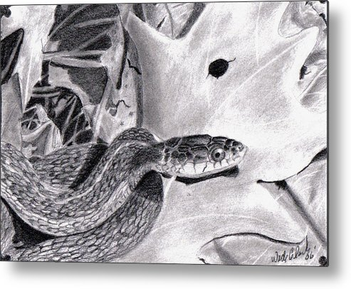 Animals Metal Print featuring the drawing Garter Snake by Wade Clark