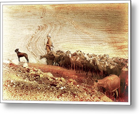 Goats Metal Print featuring the photograph Goatherd by Mal Bray