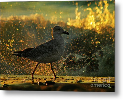 Seagull Metal Print featuring the photograph Have A Walk By Th Sea by Angel Ciesniarska