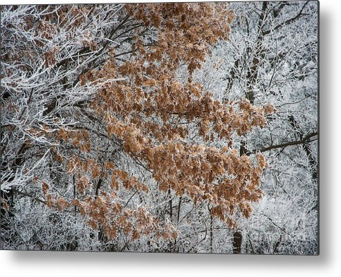 Kansas Metal Print featuring the photograph Hoarfrost Trees by Fred Lassmann